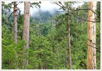 志水木材産業について